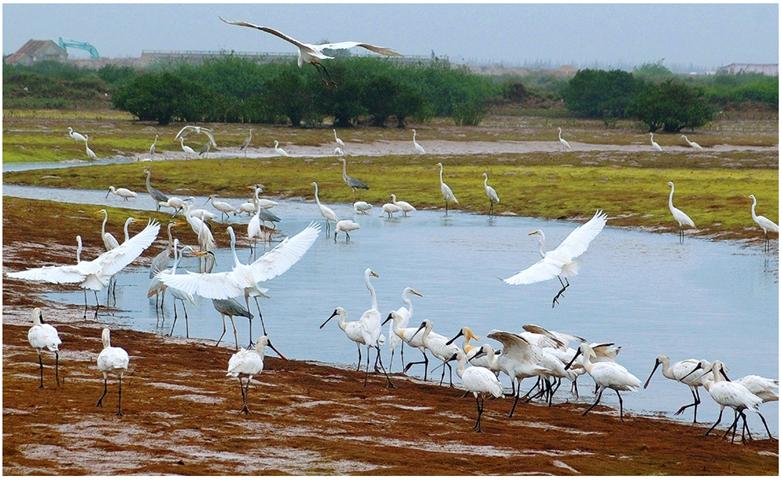 Vườn quốc gia Xuân Thủy - Nam Định
